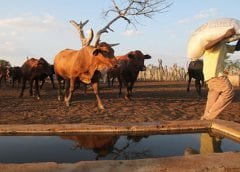 USAID partners with industry players led by Cargill to launch US$33m livestock management initiative
