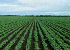 Sahel Capital, KfW launch US$24m Social Enterprise Fund for Agriculture in Africa