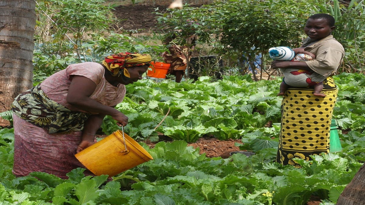 Canada's high commission in Ghana commits US$430,000 to support women agribusiness